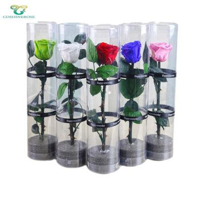 Preserved Roses With Stems