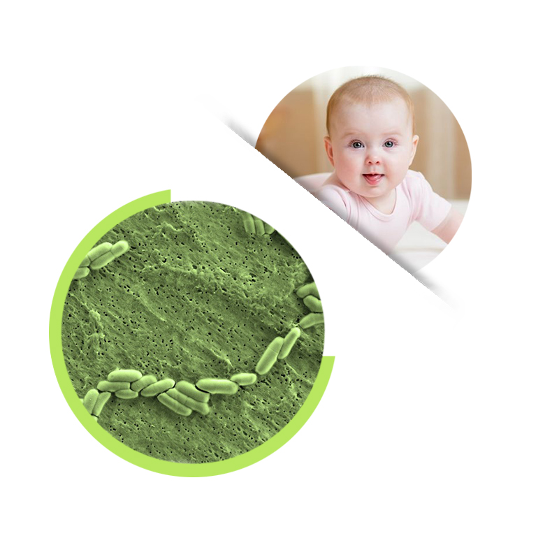 Bifidobacterium lactis Food grade Probiotic powder