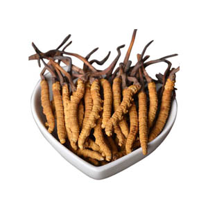 High Purity Cordyceps Extract China