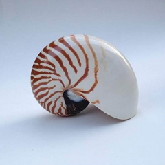 Nautilus Shell Decor Fish Tank Ornaments