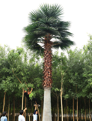 Artificial Washington Palm Tree
