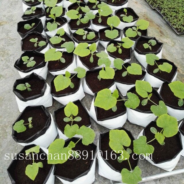 Biodegradable plant nursery plant grow bag