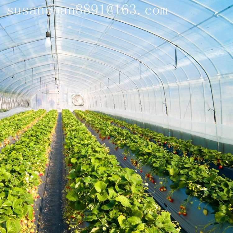 PE material plastic agricultural greenhouse film