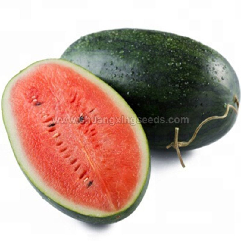 High yield and resistance hybrid watermelon seeds