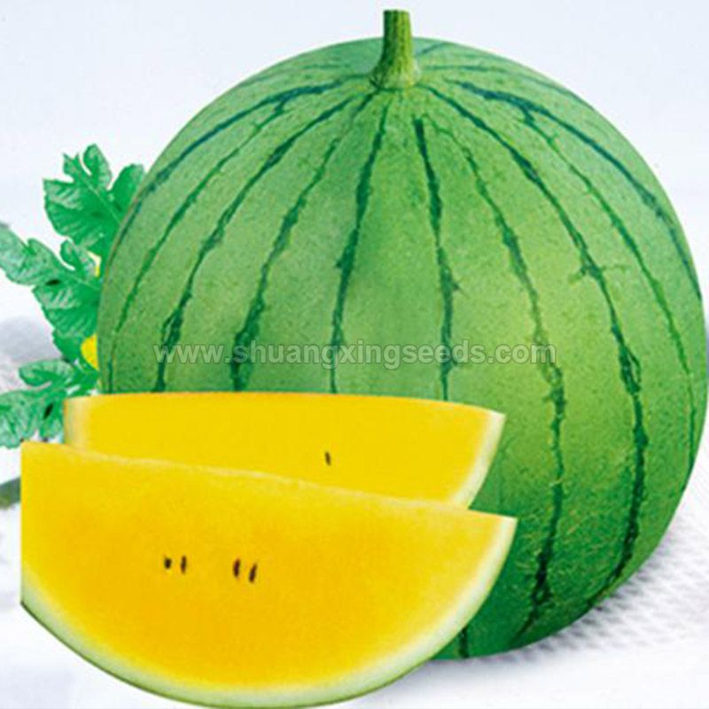 European and american markets hybrid F1 watermelon seeds