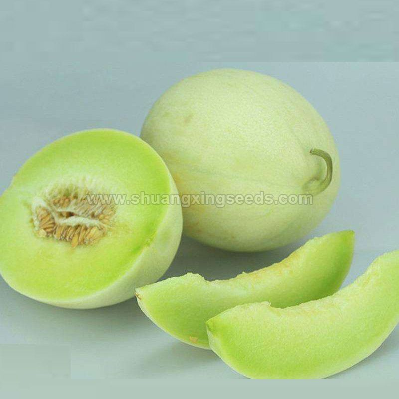 Hybrid F1 honeydew melon seeds for planting