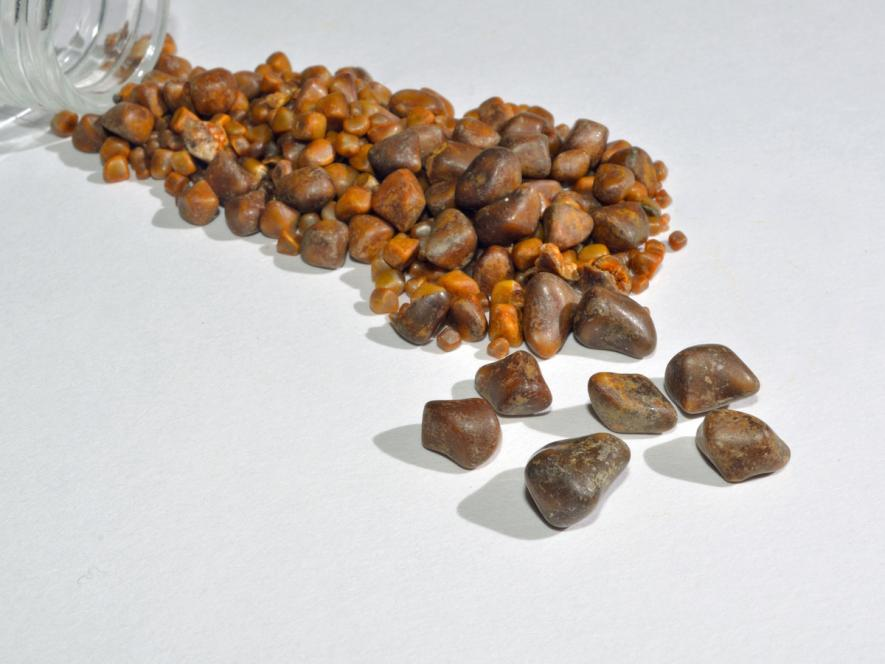 ox/cow gallstones