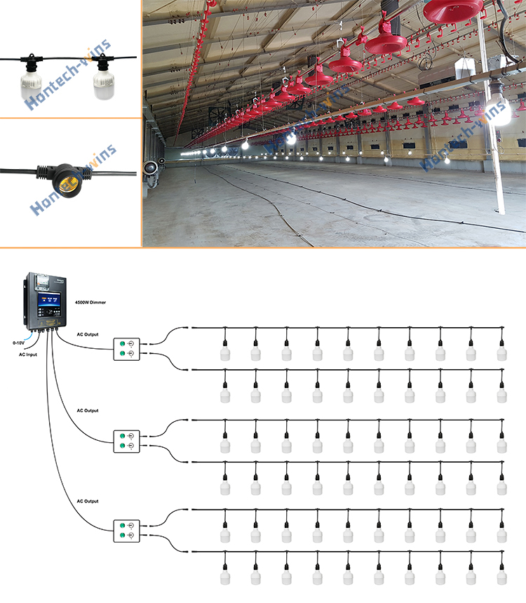 Poultry lighting system tube light