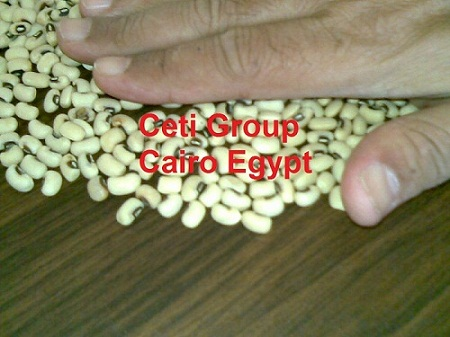 black eye beans Egypt