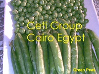 green peas Egypt