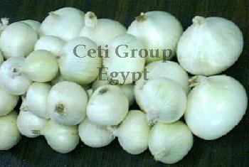 white onion Egypt